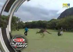 Niegrzeczny kangur przerwał zawody golfowe