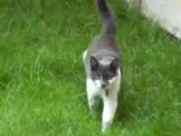 Atak dzikiego kota