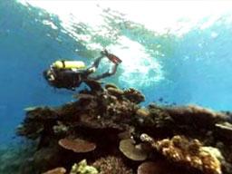 Nurkowanie na Fiji w 3D