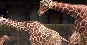 Podglądnięte w zoo - jego mina jest bezcenna
