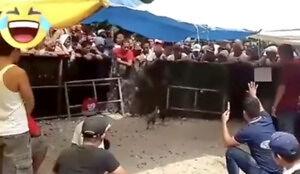 Zaskakujący finał walki kogutów