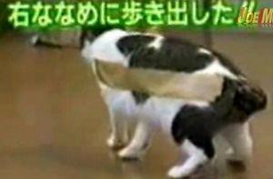 Kot i taśma klejąca