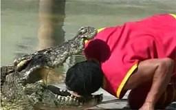 Krokodyl show