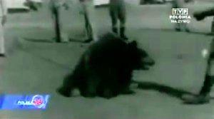 Wojtek Miś - niedźwiedź w Armii Andersa