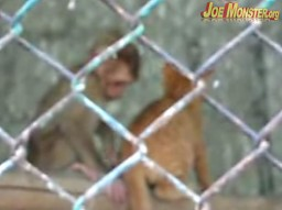 Małpka i kotek