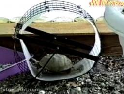 Morderczy trening żółwia