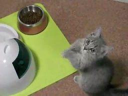 Kociak błaga o jedzenie
