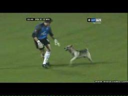 Pies, dwunasty zawodnik na meczu