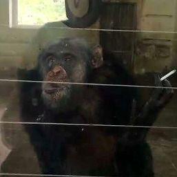 Wyluzowany małpiszon pali