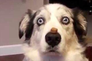 Kompilacja psów, które zrobią ci dzień