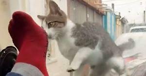 Chciał przestraszyć kota... c*uj jeden
