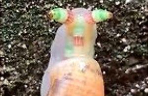 Ten hipnotyzujący ślimak to ofiara pasożyta, wyjątkowo wrednego sk**syna