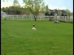 Pies przynosi piłkę na głowie