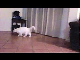 Kot, który przestraszył sie własnego cienia