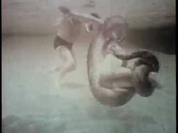 Zabawa z anakondą