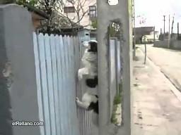 Ten pies myśli, że jest kotem