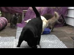 Kocie odkrycie