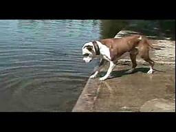 Pies poznaje grawitację