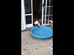 Ja chcę mieć basen w domu!