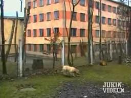 Parkour w psim wydaniu