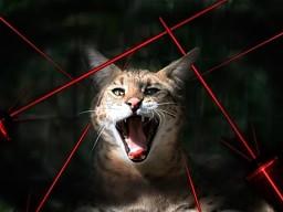 Duże koty kontra laser