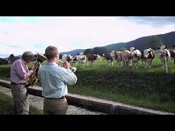 Jazz dla krów