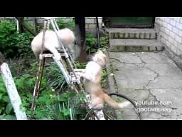 Kocie kung-fu