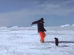Nagły atak pingwina