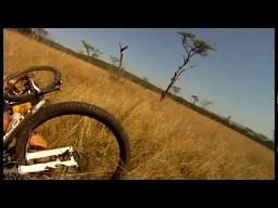 Rowerzysta potrącony przez antylopę