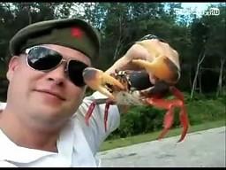 Zemsta kraba