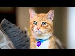O czym myśli kot?