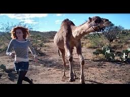 Tak biega wielbłąd