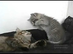 Nie drażnij kota, kotku
