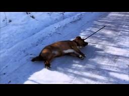 Pies, który nie cierpi zimy
