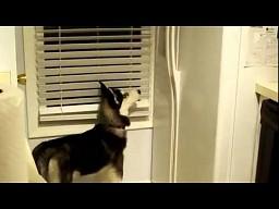 Pies, który uwielbia kostki lodu