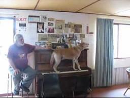 Pies pianista-wokalista