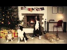 """""""Jingle barks"""" - rozszczekane Święta"""
