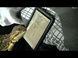 Jaszczurka gra na smartfonie