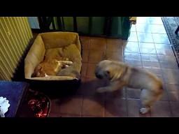 """""""Oddaj moje wyreczko!"""""""