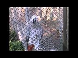 Gadająca papuga w polskim ZOO