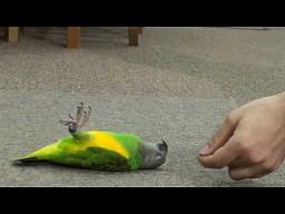 Zdechł ptak!