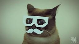 Dubstepowy hipsterski kot