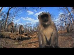 Małpia odyseja 2012