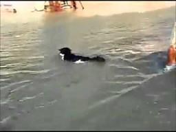 Kot pływa z panią