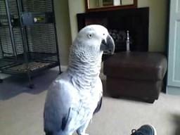 Nie tykać ptaka!