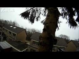 Ścinanie drzewa po holendersku