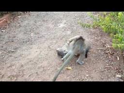 Małpka bawi się z kotkiem