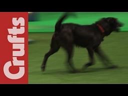 """Psia wpadka na zawodach """"agility"""""""