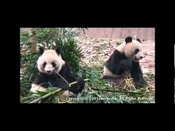 Panda z wyłącznikem