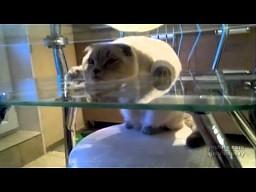 Pół kota odpoczywa